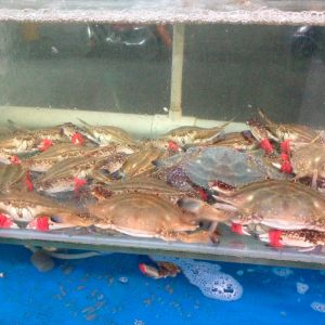 Crabes vivants (portunus spp) dans un restaurant en Chine.